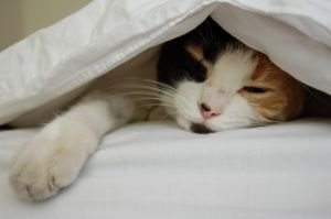 Cat Puts Self To Sleep In Own Bed